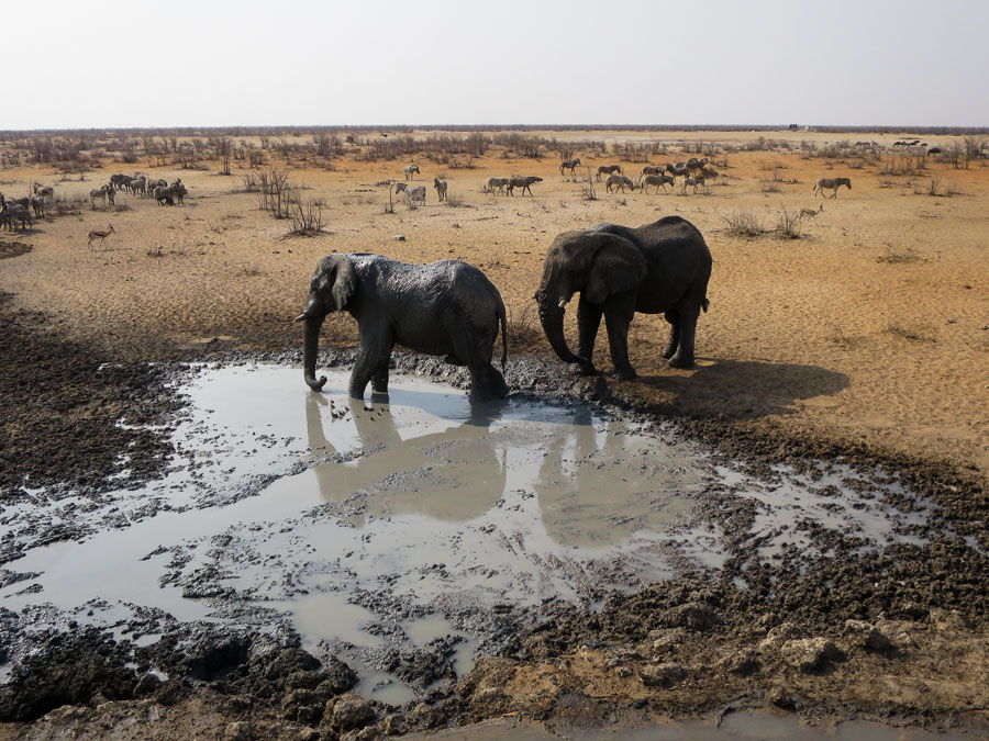 Elephants visit the waterhole next to the hide at Olifanstrus Camp.